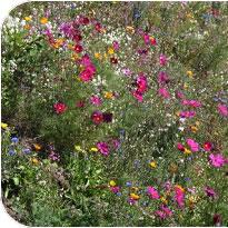 Wild Flowers EcoTec